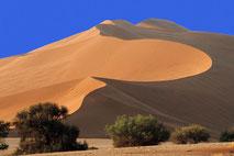 Tier- und Naturfotos aus dem Etosha Nationalpark der Namib und der Skelettküste in Namibia.