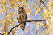 Vogelfotografie, Reiher / Bird photography, herons