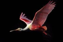 Vögel aus aller Welt. Vogelfotografie. Bird Photography