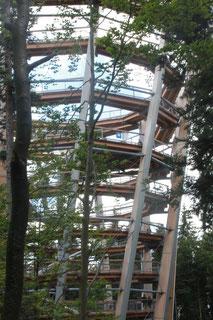 Turm des Baumwipfel-Pfades