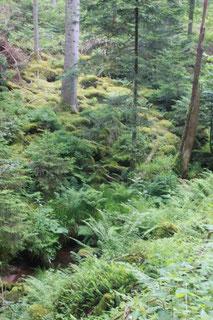 im Eisengrund - Blick zum Heselbach