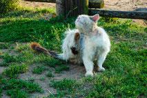 Kratzende Katze von Pixabay/IgorShubin