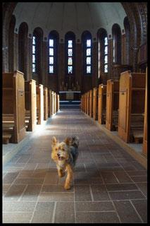 Krümel (Yorkshire Terrier) in der Martin-Luther-Gedächtsniskirche