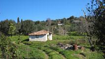 Üppig grüne Landschaft, kleines weisses griechisches Häuschen.