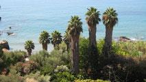 Sieben hohe Palmen, von oben gesehen, vor dem Meer, Koroni Griechenland.