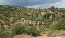 Mediterrane Landschaft mit Olivenbäumen und Zypressen.