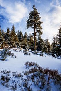 Harzer-Winterwald, Winter-am-Bruchberg, Nationalpark-Harz, Harzer-Winterlandschaft, Oberharz, wandern-im-Harz, Highlight-im-Harz, Harz-Natur, Canonfoto, Canon, Canon-16-35mm, Harzlandschaft, Winter-im-Harz. Fichtenwald-im-Winter