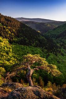 Ilsestein-zum-Brocken, Nationalpark-Harz, Ilsestein-im-Abendlicht, Ilsetal, Harzer-Wandernadel, Stempelstelle-30, wandern-im-Harz, Highlight-im-Harz, Harzfoto, Harz-Natur, Canonfoto, Canon, Canon-16-35mm, Harzlandschaft