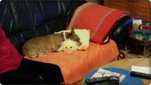Wie du auf den Fotos sehen kannst, geht es der kleinen Maus bestens - und meine Mama ist total happy!! :) Wenn sich nichts gravierendes ändert, glaube ich nicht, dass meine Mama sie nochmal hergibt ;)