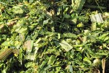сушка Neweco Tec для травы, травяная мука