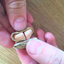 Erfahrungsbericht: Erdnüsse anbauen