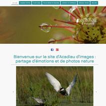 Dans le 1000 Communication - Agence web et design en Loir-et-Cher - Création du site web responsive design du photographe nature en Sologne et ailleurs Alexandre Roubalay - Acadiau d'Images