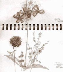 Dessiner les plantes des Cévennes. Herborisation©NadineVilas