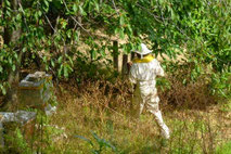 Visite de Bastien au rucher en Cévennes