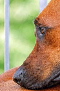 Bleibende Erinnerung - Urnen für Hunde und Katzen