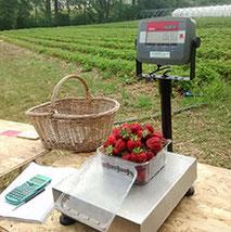 Balance pour tarer et peser les fraises