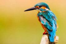 Bird photography Vietnam