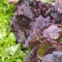 Légumes de maraîchers locaux