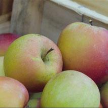 Fruits de producteurs locaux