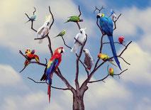 Vögel verschiedenster Arten