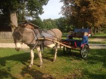 ErgoEzel Activiteiten met assistentie van ezels