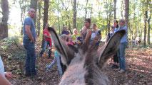 ErgoEzel ergotherapie met assistentie van ezels