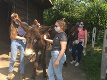 Vorming Animal assisted therapy ErgoEzel Duffel