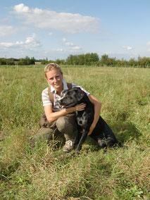 schwarze Labrador Retriever