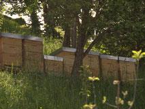 Bienenstöcke im hohen, grünen Gras