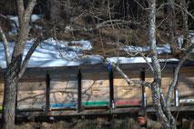 Bienenstöcke im März