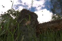 Schwarm auf Stein