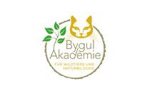 bygul-akademy-grafik-thielen-logodesign-webdesign-grafikdesign-bilddesign