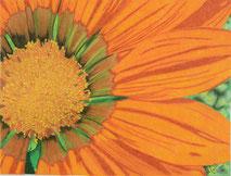 Dessin crayons de couleur gros plan fleur orange