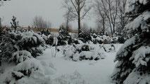 Blick in meinen Garten vom Montag den 04.02.2013 um 14:15 Uhr. Es gab über Nacht von So. auf Mo. bis zu 18 cm Neuschnee.
