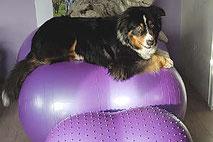 gerätetherapie für hunde
