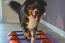medizinische Trainingstherapie für Hunde