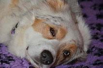 Dorn Therapie für Hunde