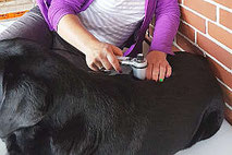 vibrationstherapie für hunde