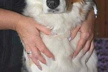Atemtherapie für Hunde