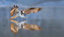 www.ronaldosephius.nl roofvogel water arend Bewust groeien vanuit innerlijke kracht