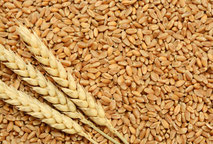 GRAINS & OILSEEDS