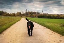 ben-an-der-warte-hunde-landschaft-natur