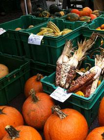 ニューヨークのマーケットで。コーンの手前がPumpkin。後ろはほとんどSquash。