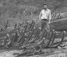 Entdeckung Coleocepalocereus braunii, Espirito Santo 1983