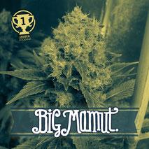 comprar semillas de marihuana en Rusia