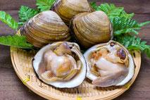 麻布十番パーソナルジムの貝