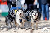 Hundeschlittengespann © ExperiArts Entertainment - Stefan Stuhr