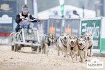 Motivierte Hunde zwischen Partnerbannern © ExperiArts Entertainment - Thomas Ix