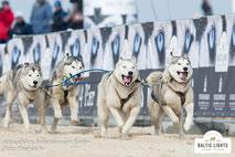 Schlittenhunde vor Veranstaltungsbannern © ExperiArts Entertainment - Thomas Ix