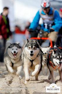 Schlittenhunde, immer der Nase nach © ExperiArts Entertainment - Stefan Stuhr